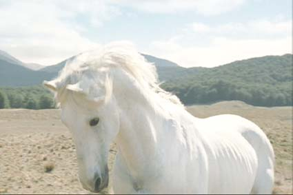 Lord of the Rings: The Two Towers: Shadowfax, Lord of Horses