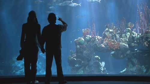 Deuce Bigalow: Male Gigolo: Deuce and Kate (Arija Bareikis) at the Aquarium.