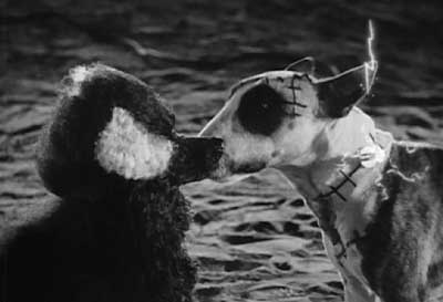 Frankenweenie: Sparky and his new girlfriend have a little kiss.