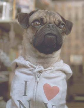 "Men in Black: Frank the Pug (voiced by Tim Blaney) in his ""I love NY"" sweatshirt."